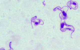 Жизненный цикл и развитие облигатных паразитов