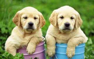 Глисты у собак: симптомы и лечение народными средствами в домашних условиях