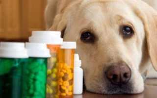 Когда и как применять глистогонные препараты для собак?