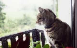 Ленточные глисты у котов: симптомы и лечение в домашних условиях