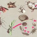 Ланцетовидный сосальщик (ланцетовидная двуустка)