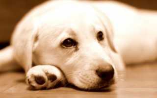 Какие бывают паразиты у собак