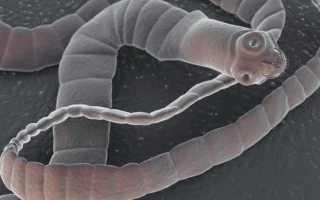 Представители класса ленточных червей