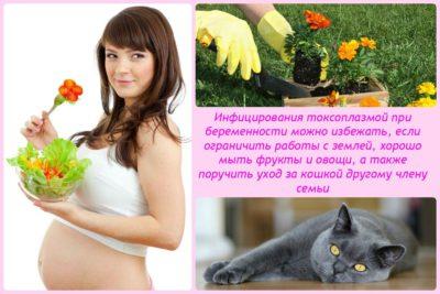 Симптоми токсоплазмозу у вагітних » журнал здоров'я iHealth 7
