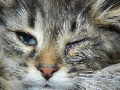 Ознаки токсоплазмозу у кішок » журнал здоров'я iHealth