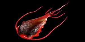 Виды паразитов у человека: фото и описание, симптомы и лечение в домашних условиях
