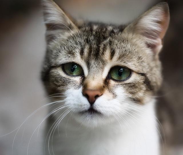 Обзор суспензий от глистов для кошек, как их давать
