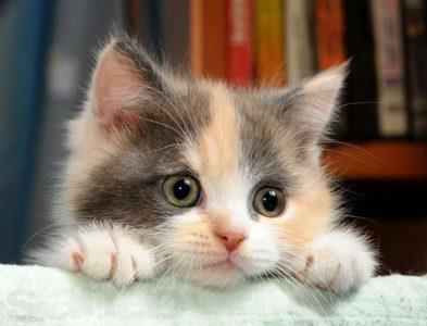 Ознаки токсоплазмозу у кішок » журнал здоров'я iHealth 2