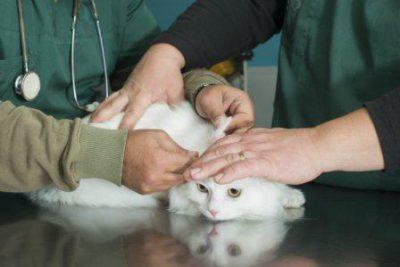 Какие капли на холку от глистов для кошек выбрать