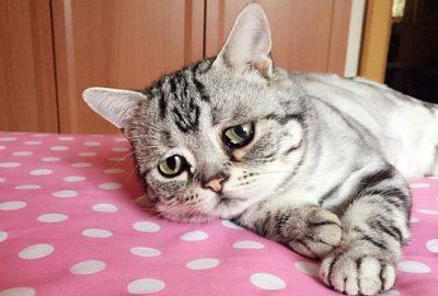 Паразити у кішок, що передаються людині » журнал здоров'я iHealth 4