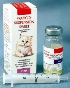 Паразити у кішок, що передаються людині » журнал здоров'я iHealth 5