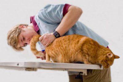 У кошки кал с кровью: что это значит, почему появился, что 83