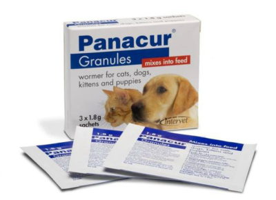 Лямблиоз у собак: симптомы и лечение в домашних условиях