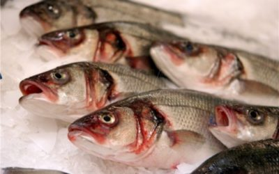 Скільки потрібно солити рибу щоб убити опісторхоз? » журнал здоров'я iHealth