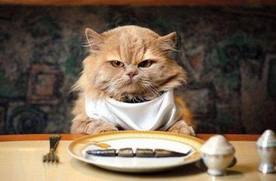 Як передається токсоплазмоз від кішки до людини? » журнал здоров'я iHealth