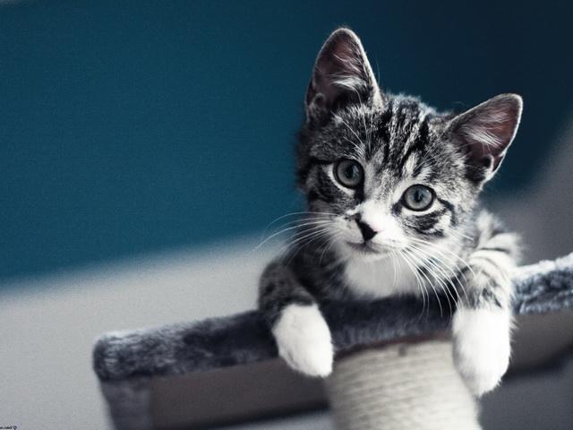Симптомы и лечение глистов у котенка