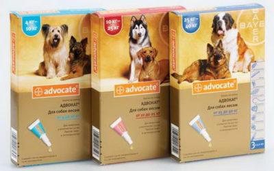 Ліки від глистів для собак » журнал здоров'я iHealth 8