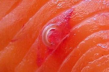 Чи є глисти в морській рибі? » журнал здоров'я iHealth 2