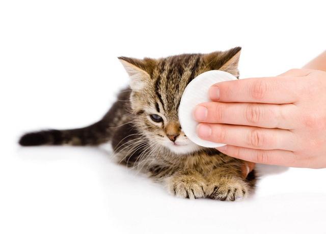 Хламидиоз у кошек и котов
