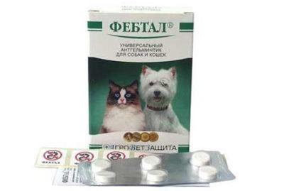 Ліки від глистів для собак » журнал здоров'я iHealth 7