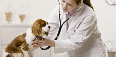 Токсоплазмоз у собак: симптоми » журнал здоров'я iHealth 2