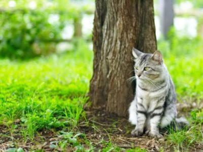 Какие бывают и как вывести паразитов у кошек и котов?