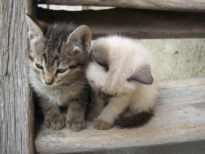 Ліки від глистів для кошенят » журнал здоров'я iHealth 1