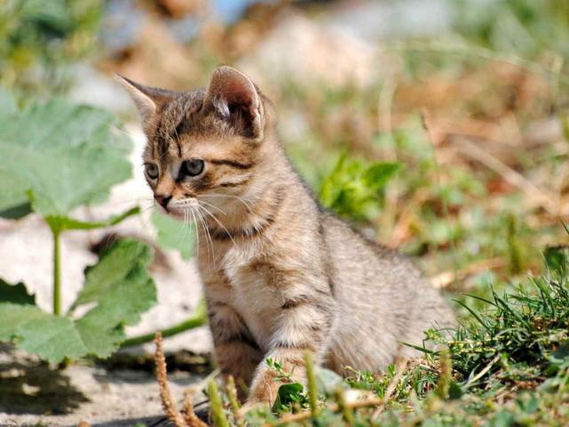 Какие лекарства давать котенку от глистов