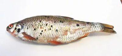 Чи є глисти в морській рибі? » журнал здоров'я iHealth 7