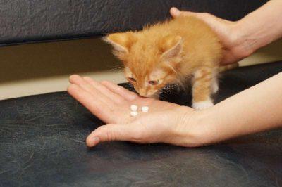 У кошки кал с кровью: что это значит, почему появился, что 88