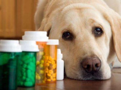 Ліки від глистів для собак » журнал здоров'я iHealth 10