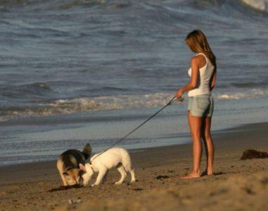 Токсокароз собак: симптомы и лечение