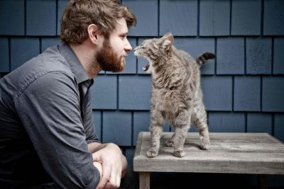 Котячі глисти передаються людині? » журнал здоров'я iHealth 2