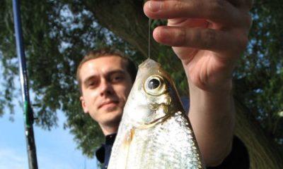 Описторхоз в какой рыбе? Список и рекомендации