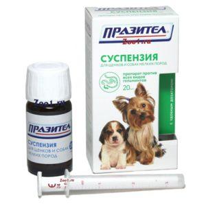 Глисты у собаки: симптомы и лечение, признаки, по которым можно понять, что у щенка глисты