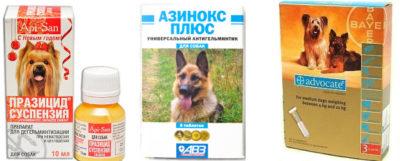 Ліки від глистів для собак » журнал здоров'я iHealth