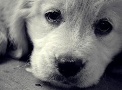 Токсоплазмоз у собак: симптоми » журнал здоров'я iHealth 1
