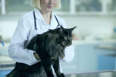 Какие бывают глисты у кошки и передаются ли они человеку?