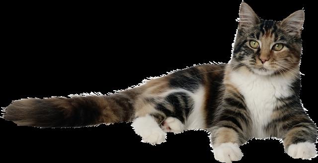 Глисты у котят симптомы и лечение в домашних условиях
