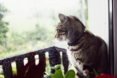 Как и чем лечить понос у кошки в домашних условиях