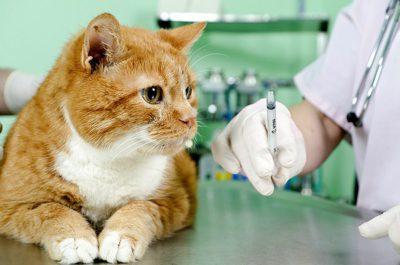 Аналіз на токсоплазмоз у кішок » журнал здоров'я iHealth 4