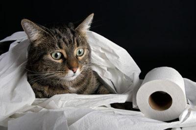 Как быстро вывести глисты у кошек с помощью народных средств