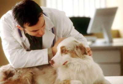 Лікування глистів у собак в домашніх умовах » журнал здоров'я iHealth 2