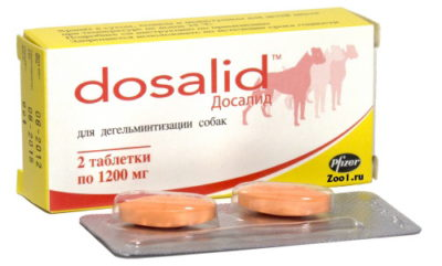 Симптомы и лечение аскаридоза у собак