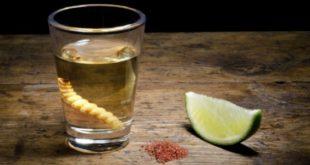 алкоголь и глисты