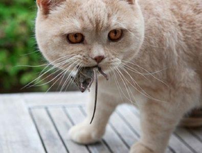 Аскариды у кошек: причины появления и методы избавления