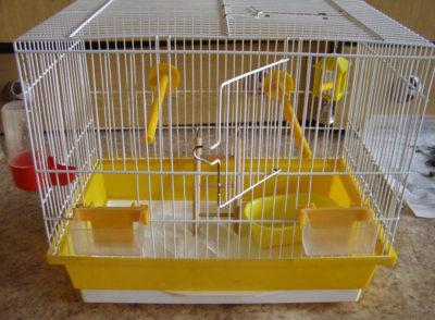 Коростяний кліщ у папуги » журнал здоров'я iHealth 6