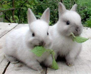 Глисти у кроликів: симптоми » журнал здоров'я iHealth