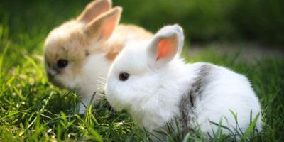 Глисти у кроликів: симптоми » журнал здоров'я iHealth 1