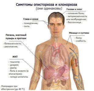 Проверка крови на глисты